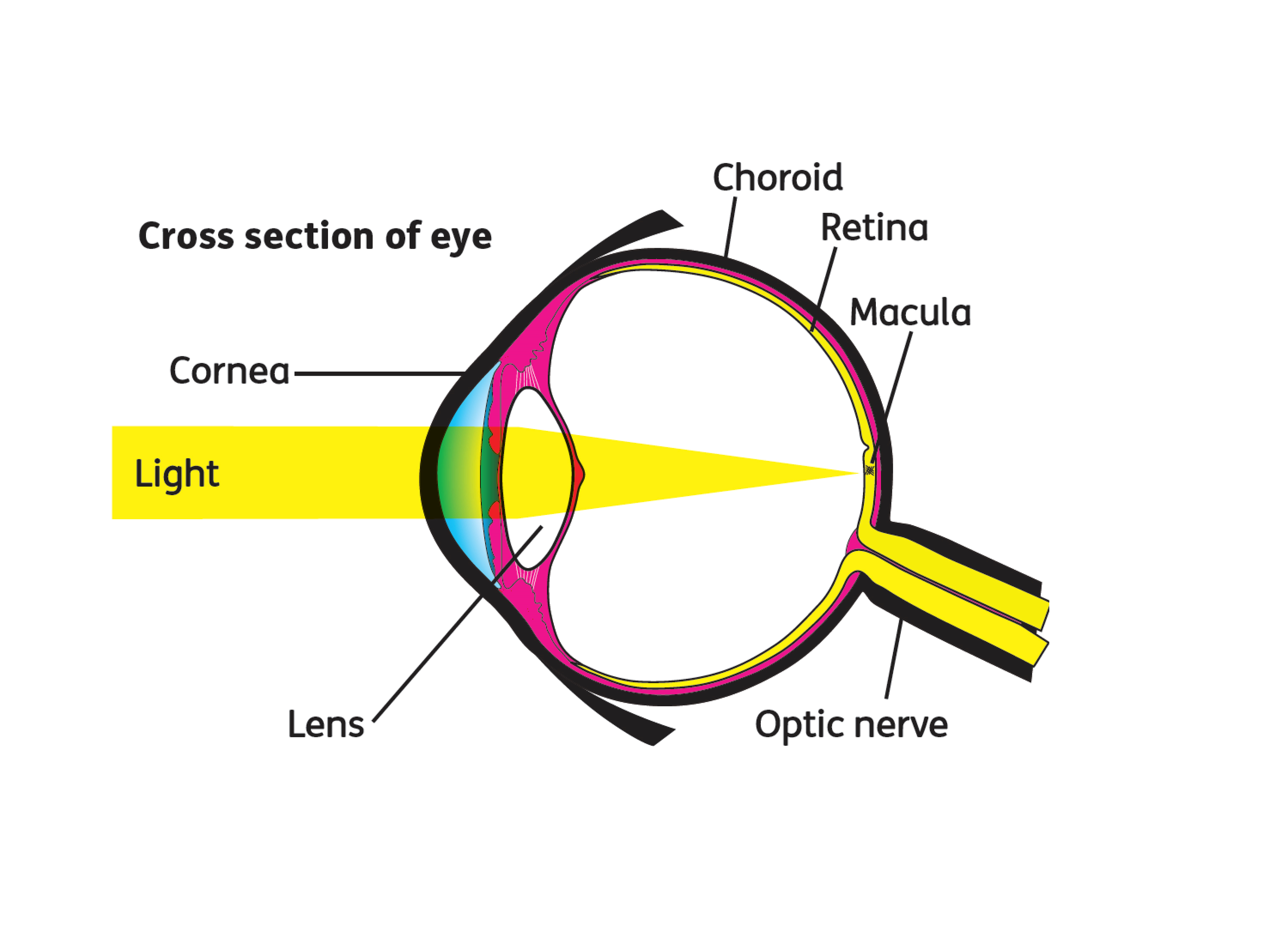 Lets talk about Macular degeneration